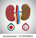 healthy and sick kidney vector... | Shutterstock .eps vector #1173928831