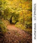 hiking through the beech forest ... | Shutterstock . vector #1173943021