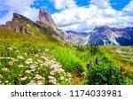 mountain meadow flowers... | Shutterstock . vector #1174033981