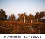 asymmetric trees at schwarzwald | Shutterstock . vector #1174110271