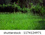 big uncultivated meadow with... | Shutterstock . vector #1174124971