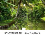 Palm Tree Tropical Forest In...