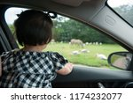 toddler girl child is watching... | Shutterstock . vector #1174232077
