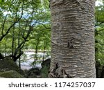 close up of striped and... | Shutterstock . vector #1174257037