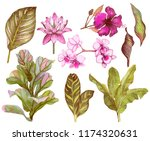 set of tropical leaves and... | Shutterstock . vector #1174320631