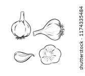 garlic vector outline...   Shutterstock .eps vector #1174335484