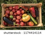 peasant family collects crop of ... | Shutterstock . vector #1174414114