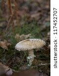 Brown Mushroom With White Spots ...