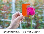 measurement with a ruler of a... | Shutterstock . vector #1174592044