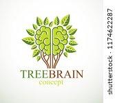 tree brain concept  the wisdom...   Shutterstock .eps vector #1174622287