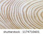 extraordinarily beautiful pine... | Shutterstock . vector #1174710601