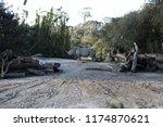 rhinoceros  'rhino'  is one of... | Shutterstock . vector #1174870621