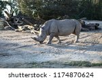 rhinoceros  'rhino'  is one of... | Shutterstock . vector #1174870624