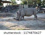 rhinoceros  'rhino'  is one of... | Shutterstock . vector #1174870627