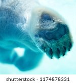 polar bear paw closeup   Shutterstock . vector #1174878331
