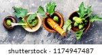 datura plant   dope or... | Shutterstock . vector #1174947487