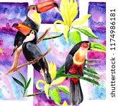 beautiful birds toucans on a...   Shutterstock . vector #1174986181