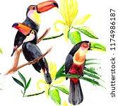 beautiful birds toucans on a...   Shutterstock . vector #1174986187