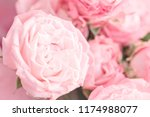 pink roses macro background.... | Shutterstock . vector #1174988077