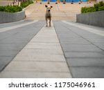 long footpath with dog | Shutterstock . vector #1175046961