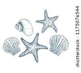 Shells And Starfish On White...