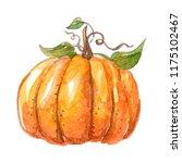 watercolor beautiful pumpkin on ...   Shutterstock . vector #1175102467