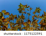 the branches of tree stand...   Shutterstock . vector #1175122591
