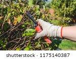 hand in a glove with garden... | Shutterstock . vector #1175140387