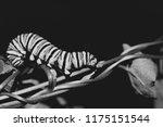 black and white macro photo of... | Shutterstock . vector #1175151544