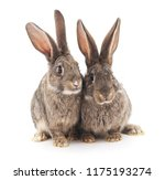 Stock photo two gray rabbits isolated on a white background 1175193274