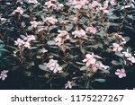 vintage retro of green plant in ... | Shutterstock . vector #1175227267