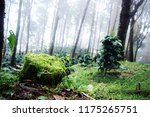 the high mountain forest area ... | Shutterstock . vector #1175265751