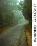 forest road in a green foggy... | Shutterstock . vector #1175372497