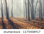 bare late autumn forest ... | Shutterstock . vector #1175408917