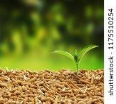 fresh green seedling sprouting... | Shutterstock . vector #1175510254