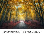 amazing autumn forest with road ... | Shutterstock . vector #1175522077