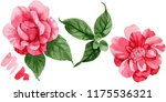 watercolor pink camellia... | Shutterstock . vector #1175536321