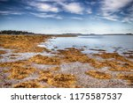 Seaweed Covered Beach With Blue ...
