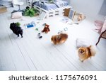 dogs in the middle of mess they ... | Shutterstock . vector #1175676091