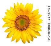Beautiful Yellow Sunflower...