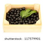 Chokeberry With Green Leaves I...