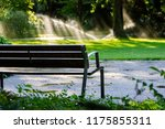 focused bench in a park with... | Shutterstock . vector #1175855311