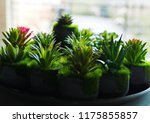 cactus plant background. | Shutterstock . vector #1175855857