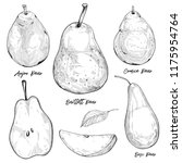 pear vector drawing set.... | Shutterstock .eps vector #1175954764