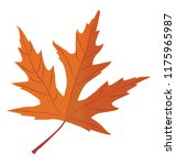 silver  maple is a autumn leaf ... | Shutterstock .eps vector #1175965987