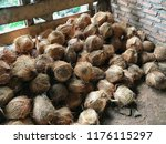 coconut pile tropical fruit at... | Shutterstock . vector #1176115297