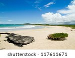 Beach Of The Galapagos Islands