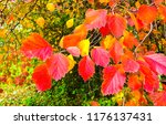 autumn bush leaves scene. red... | Shutterstock . vector #1176137431
