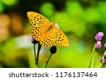 Stock photo butterfly on flower view macro view butterfly flower butterfly macro view flower butterfly 1176137464