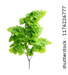 a maiden hair fern  s foliage... | Shutterstock . vector #1176226777